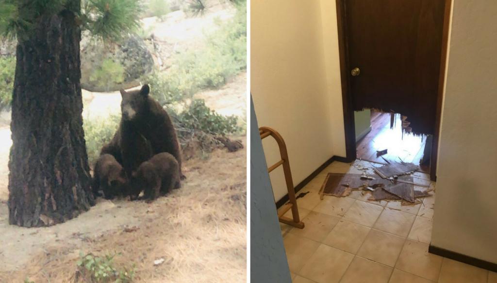 Un orso visita il ritiro della Quick Step